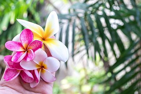 발리, 아름 다운, 아름다움, 블 룸, 피, 꽃, 식물