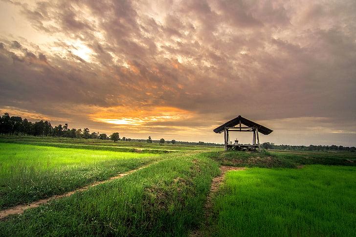 hjem utenfor, Thailand, åkeren, ris, Golf club, folk, kultur