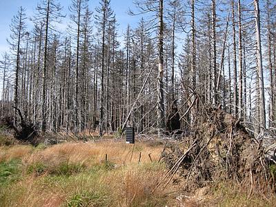 arbre moribund, fusta morta, mort vegetal, pluja àcida, bosc, Grove