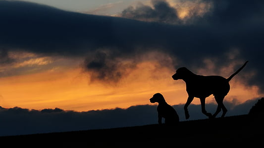 silhuet, to hunde, Sunset, Dusk, dyr temaer, Sky, et dyr