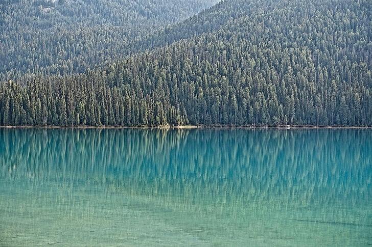 água, Costa de floresta, reflexão, Lago, natureza, cênica, tranquilo