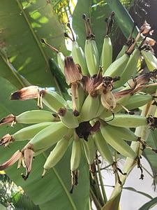 small, good, bananas