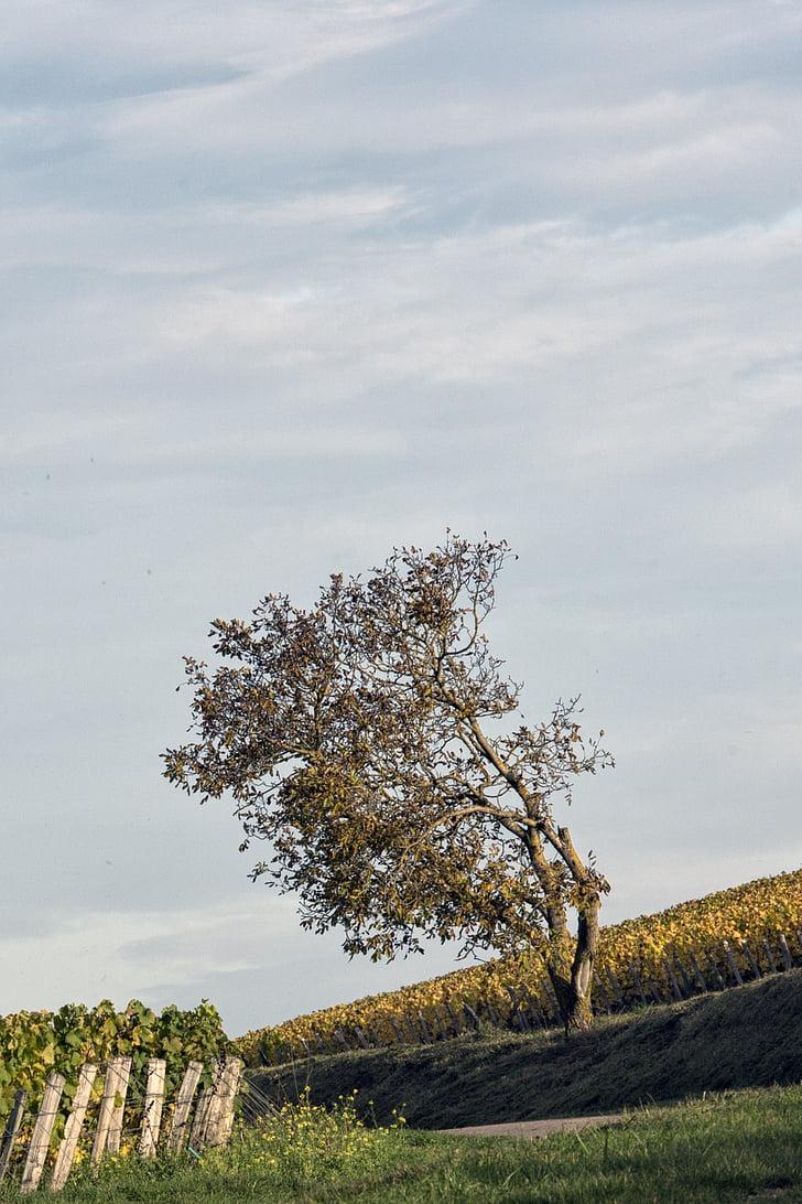 vines, trees, field, france, landscape, nature, vineyard