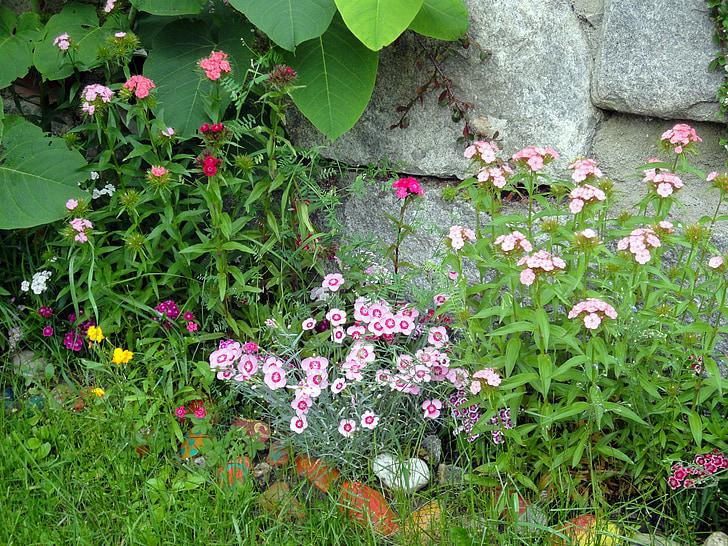 garden, bart cloves, flowers, bright, pink, red, white