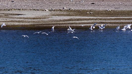 gulls, river, water, flight, port, boats, bridges