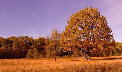 upadek, kolory, jesienią liście, jesienne kolory, pozostawia, drzewo jesień, Złota Jesień