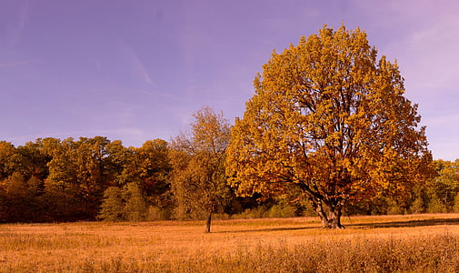 padec, barve, spadajo listi, Jesenske barve, listi, drevo jeseni, zlati jeseni