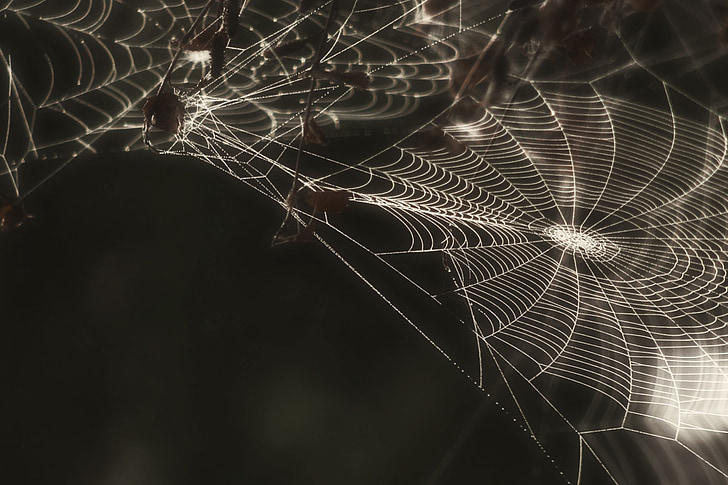 แมงมุม, เว็บ, ค็อบเว็บอินเตอร์, แมลง, ผี ๆ, สีดำและสีขาว, แมโคร