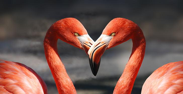 flamingo, valentine, heart, valentine's day, love, romantic, lovers