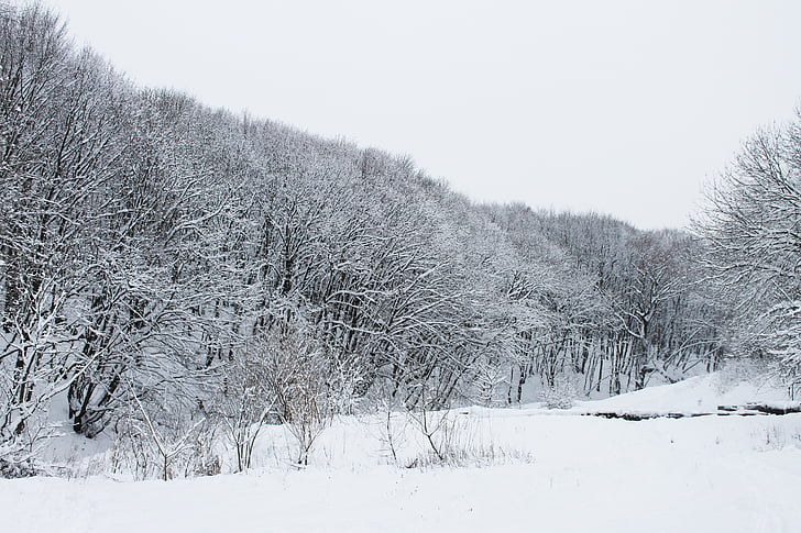 metsa, talvel, Talvine mets, lumi