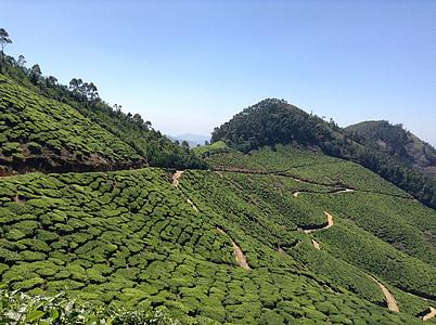 čaj, Plantation, Príroda, Zelená, pole, vidieka, Príroda