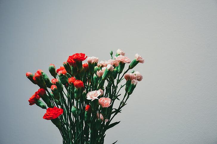 anjers, bloemen, plant