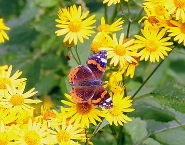 пеперуда, цветя, пеперуда върху цвете, природата, пеперуди, насекоми, красота