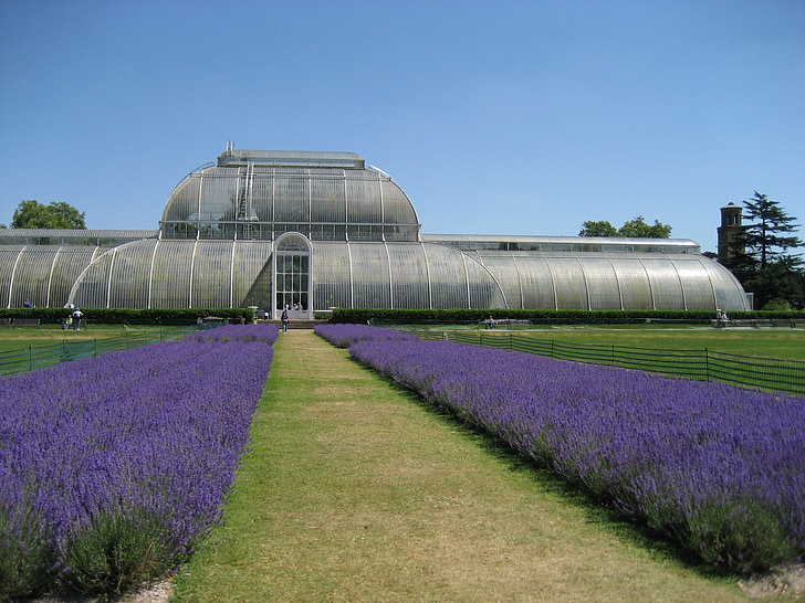 jardins de Kew, lavanda, Londres, Anglaterra, natura, Parc, herba
