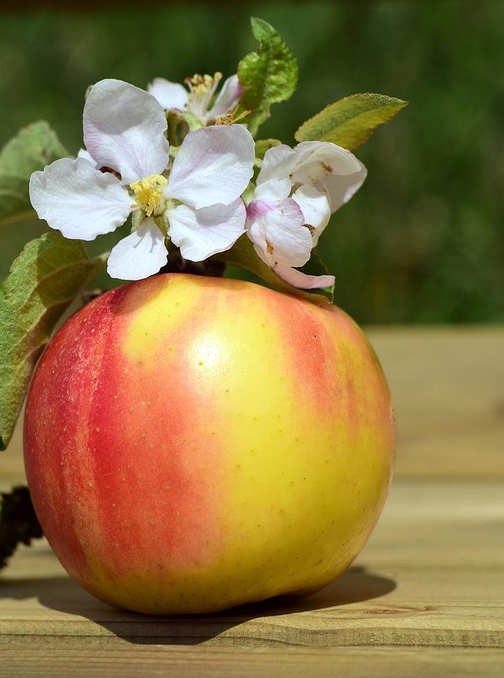 Apple, Apple blossom, kevadel, õis, Bloom, puu, süüa