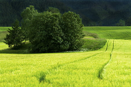 field, green, sunny, green field, nature, summer, landscape