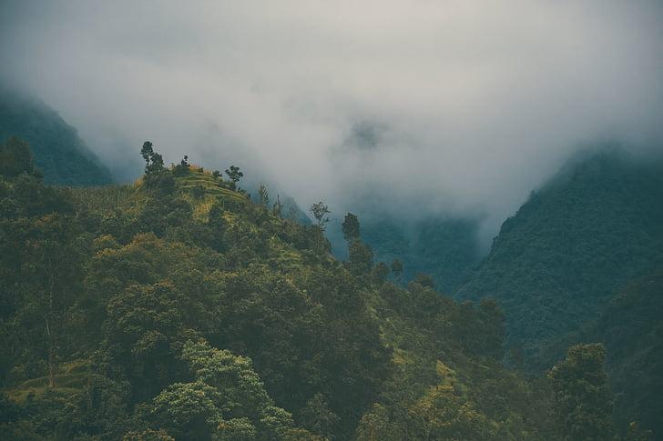 montanha, árvores, planta, natureza, Highland, paisagem, nevoeiro