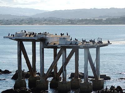 Monterey bay, Kalifornien, stranden, fåglar, Rocks, Pier, Seagull