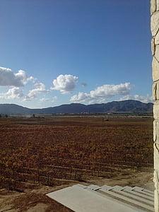 vineyard, landscape, autumn
