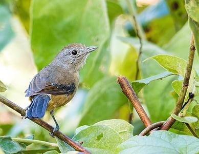 bird, nature, tropical birds, birdie, animals, bird on a branch, animal