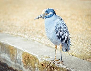 beak, bird, feathers