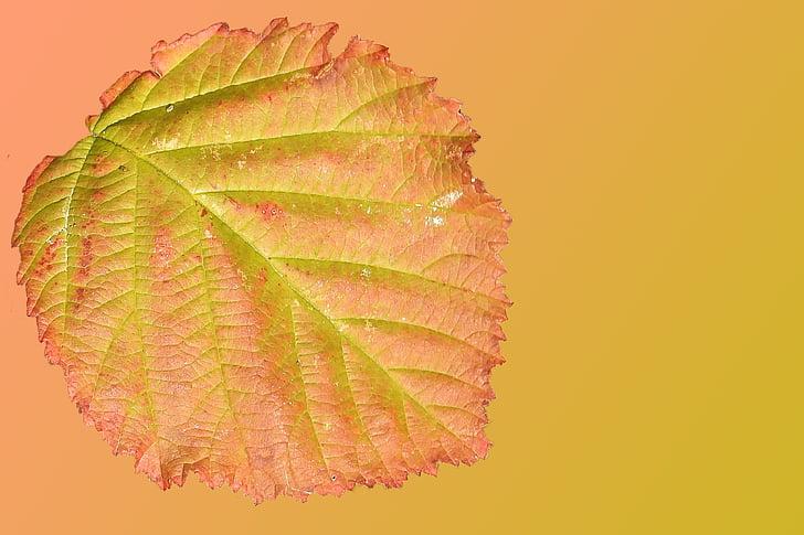Leaf, rudenī zaļumiem, rudens krāsu, krāsains, krāsains lapas, daba, rudens