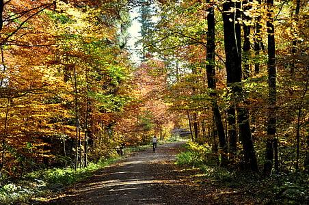 Sonbahar, yaprak döken orman, Orman, doğa, sonbahar yaprakları, yaprak, ağaç