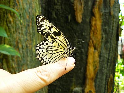 Motyl, zwierząt, owad, zwierzęta, motyle, fauna, Kolor