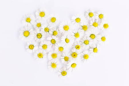 tratinčica, srce, tratinčica srce, ljubav, u obliku srca, romantična, Zatvori