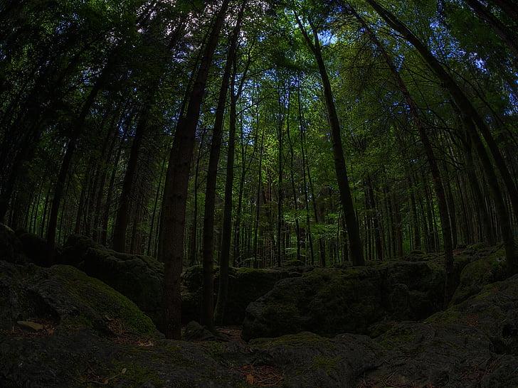 samanų, miško, žalia, bemoost, Gamta, laukinių, Miško pasakos