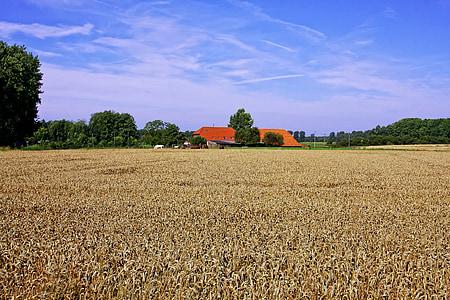 Viljapõllu, põllumajandus, talukoht, talu, Niederrhein, tera, väli