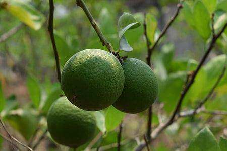 レモン, ライム グリーン, グリーン, 新鮮なレモン レモン