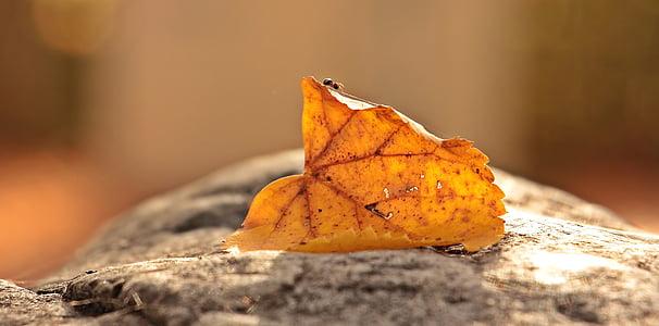 fourmi, feuilles, feuillage feuille, insecte, nature, automne, humeur automne