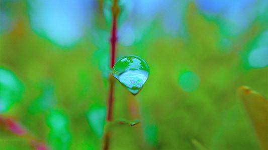 Makro, vihma tilk, vee tilk, tilk, loodus