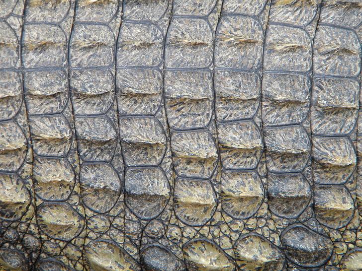 Cocodril, pell, rèptil, salvatge, natura, Predator, textura