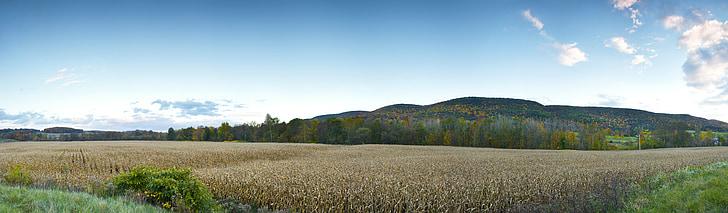 blat de moro, camp, camp, terres de conreu, paisatge, paisatge
