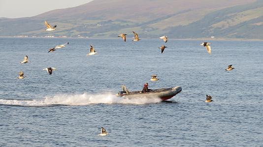 Mar, bota, gavines, eixam, ramat d'ocells, soroll, Powerboat
