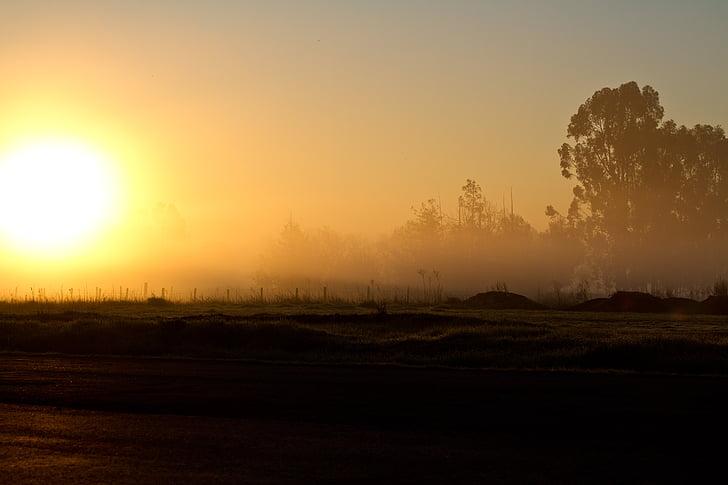 soluppgång, morgon, solen, Dawn, solsken, ljus, träd