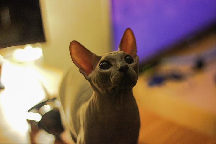 Tumblr mlada crna maca