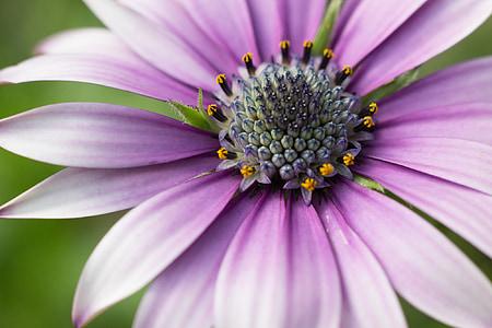 kwiaty, Fotografia makro, ogrodnictwo, ogród