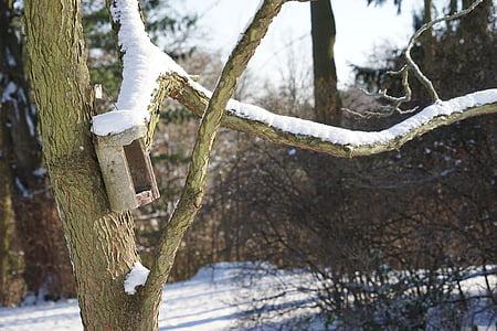 winter, fodder filters, bird, snow, bird feeder, winter feeding