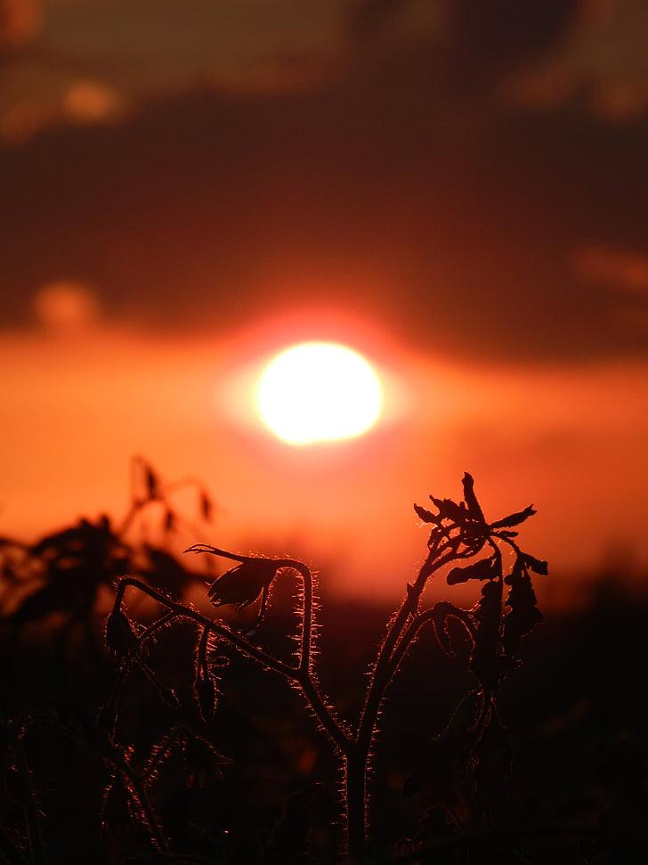 solnedgång, solen, naturen, siluett, skymning, tillbaka upplyst, solljus
