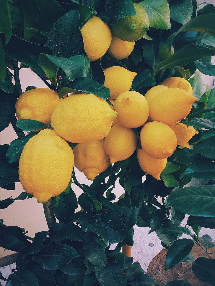 groc, llimona, fruites, aliments, natura, arbre, arbres