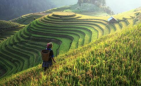 agricultura, Asia, gato, China, nube, colorido, el país
