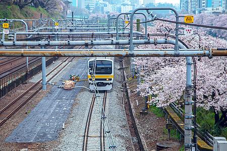 Cherry, Japan, elektriska tåg, säsongsbetonade, tradition