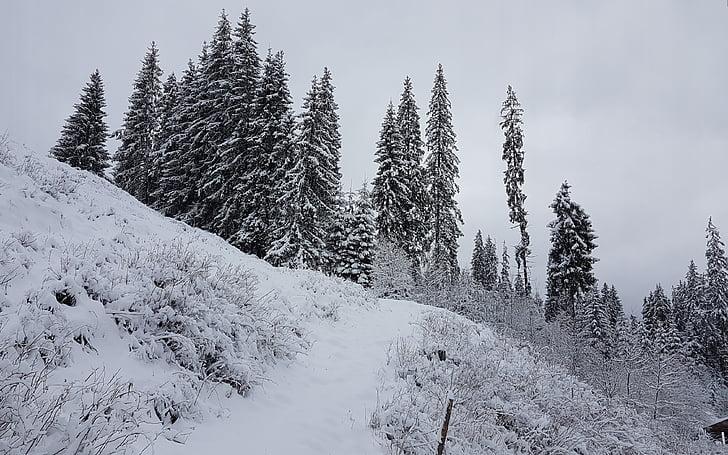 vinter, historie, sne, grantræer, skønhed