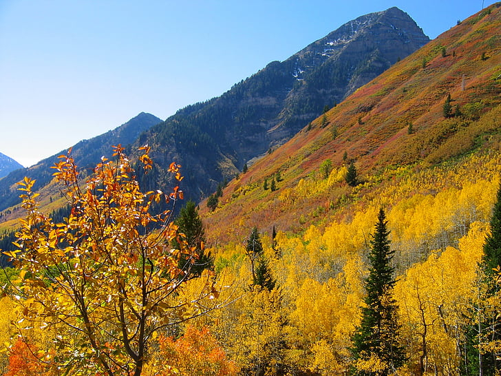 Foto gratis: Aspen, pegunungan, musim gugur, hutan | Hippopx