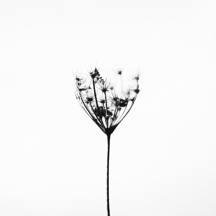 φύση, φυτό, μινιμαλιστική, μαύρο άσπρο, σιωπηλή, ήσυχο, αντίθεση