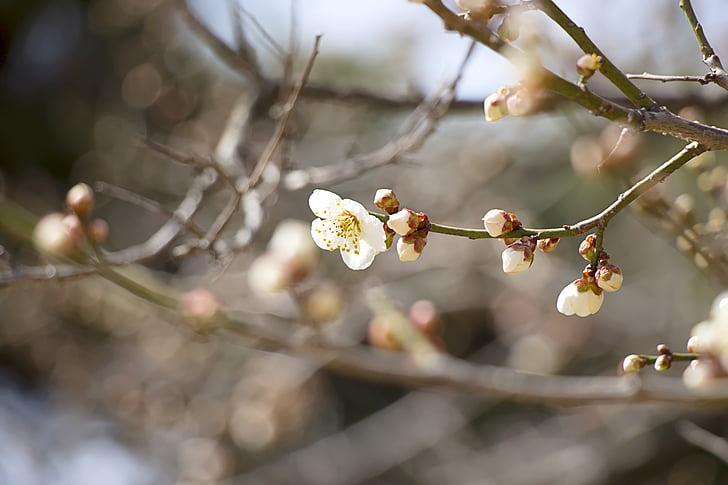 kevadel, Kevadlilled, loodus, kirsi õis, Sakura, roosa lill, purustada