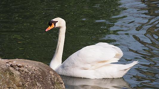 gulbis, mute swan, skaistumu, lepnums, ūdens putnu, dīķis, ezers